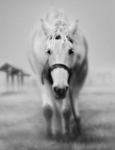 Poster of Equus